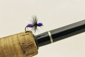 Flygmyra /Flying Ant Purple